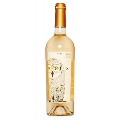 Otus Viini